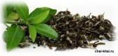 Полезен или вреден зеленый чай
