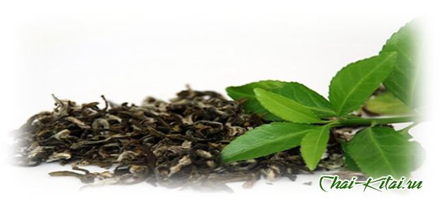Черный чай отличие от зеленого